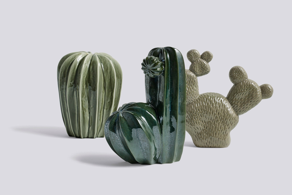 hay-cacti-family